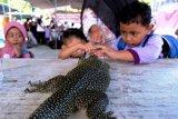 Belajar Mengenal Hewan Reptil Papua