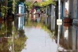 Warga melintasi jalan yang terendam air di Desa Kedungbanteng, Tanggulangin, Sidoarjo, Jawa Timur, Jumat (7/2/2020). Menurut data BPBD Sidoarjo, sebanyak 350 rumah di Desa Kedungbanteng dan Desa Banjarasri terendam banjir selama hampir tiga minggu. Antara Jatim/Umarul Faruq/zk