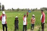 Bupati minta petani kelola pertanian secara maksimal