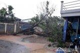 Hujan angin kencang, rumah rusak dan pohon tumbang di Bandung