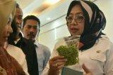 Wagub Sulbar minta penyuluh pertanian tingkatkan kinerja