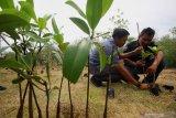 Sejumlah wartawan yang tergabung dalam Wartawan Pecinta Lingkungan bersama warga menanam bibit mangrove di Ekowisata Mangrove Gunung Anyar, Surabaya, Jawa Timur, Minggu (9/2/2020). Kegiatan tanam bibit mangrove yang diikuti 50 wartawan bersama warga tersebut sebagai bentuk kepedulian terhadap lingkungan sekaligus dalam rangka memperingati Hari Pers Nasional 2020. Antara Jatim/Moch Asim/zk.