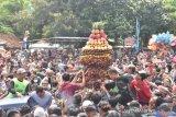 Ayo ke Desa Limbangan Pekalongan mumpung ada festival durian