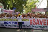 North Sumatra Gov confirms African Swine Fever killed 47,143 hogs spread to 21 districts-cities