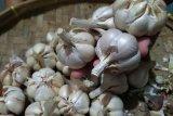 YLKI: Pembatasan impor bawang putih momen kembalikan swasembada dan ketahanan pangan