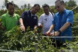 PT Ewindo-PT Lautan Luas latih petani kembalikan kejayaan cabai di Lampung Tengah