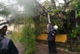 Hujan disertai angin kencang akibatkan puluhan pohon tumbang di DIY