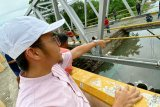 Jembatan trans sulawesi ambruk diduga karena karatan