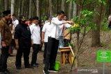 Sepasang elang Jawa dilepas Presiden Jokowi