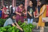 Asyik, emak-emak di KSB dapat bantuan bibit sayuran