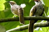 Indonesia salah satu habitat burung terbanyak di dunia