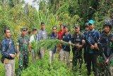 Satgas Pamtas Yonif Raider 300 dan BNNP Papua kembali temukan ladang ganja di Waris