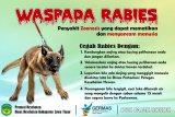 Distanak Kota Baubau lakukan peracunan rabies