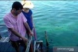 Miris, turis asing batal snorkeling di Bintan akibat limbah minyak hitam