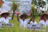 Loekman target hasil panen padi di Lampung Tengah capai 12 ton per hektare