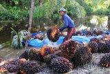 18 Kepala Desa di Indragiri Hilir dilaporkan ke Kejati Riau