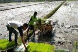 Kulon Progo diminta susun DED sumber air baku untuk irigasi Kalibawang