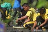 Sejumlah personel Kepolisian Polres Aceh Barat bersama aktivis lingkungan menanam bibit mangrove di kawasan pesisir pantai Desa Peunaga Rayeuk, Meureubo, Aceh Barat, Aceh, Jumat (21/2/2020). Kegiatan penanaman mangrove yang dilaksanakan serentak seluruh jajaran Direktorat Polisi Air Baharkam Polri Se-Indonesia bertujuan untuk meningkatkan perekonomian masyarakat pesisir melalui program wisata hutan mangrove, menjaga kelestarian ekosistem laut, mencegah abrasi sekaligus mengajarkan kepada anak usia dini tentang pentingnya menjaga dan merawat lingkungan. Antara Aceh/Syifa Yulinnas.