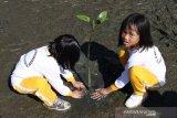 Dua siswa menanam bibit mangrove di kawasan pesisir pantai Desa Peunaga Rayeuk, Meureubo, Aceh Barat, Aceh, Jumat (21/2/2020). Kegiatan penanaman dan edukasi yang digelar Satuan Polisi Air (Satpolair) Polres Aceh Barat bertujuan untuk memberikan pengetahuan sejak dini dalam upaya membangun jiwa cinta lingkungan sekaligus untuk mengenalkan secara detail fungsi dan keberadaan tanaman mangrove di kawasan pesisir pantai. Antara Aceh/Syifa Yulinnas.