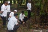 PTPN VII tekan kehilangan produksi kelapa sawit