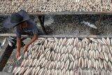 Pekerja menjemur ikan tongkol yang telah dibersihkan untuk diolah menjadi ikan kayu (keumamah) di salah satu tempat pengolahan ikan Keumamah Desa Lampulo, Banda Aceh, Aceh, Minggu (23/2/2020). Produksi rumah tangga ikan keumamah untuk memenuhi permintaan pasar lokal dijual Rp40.000 hingga Rp50.000 perkilogram . Antara Aceh/Irwansyah Putra.