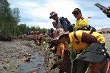 Polisi Mimika tanam pohon mangrove di pesisir pantai Poumako