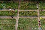 Foto udara sejumlah warga mengunjungi Holland Park di Tilihuwa, Kabupaten Gorontalo, Gorontalo, Minggu (23/2). Obyek wisata baru tersebut menawarkan pemandangan hamparan bunga warna-warni serta lokasi swafoto bernuansa Jepang dan Korea. (ANTARA FOTO/Adiwinata Solihin)