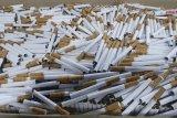 Bahayanya paparan COVID-19 bagi penderita penyakit kronis-paru akibat rokok