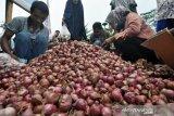 Poso kembangkan budidaya bawang merah dengan teknologi benih biji