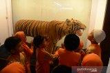 Sejumlah murid sekolah dasar bersama guru mereka menyaksikan offset harimau saat berkunjung di Museum Aceh, Banda Aceh, Kamis (27/2/2020). Pengenal offsetan harimau dan termasuk gajah dan satwa dilindungi lainnya di Museum Aceh itu, merupakan salah program edukasi pendidikan sekolah untuk mengenal jenis satwa dilindungi kepada anak usia dini. Antara Aceh/Ampelsa.