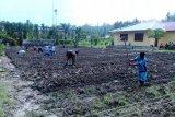 Prajurit TNI dampingi siswa SMKN Pertanian Wapoga belajar bercocok tanam