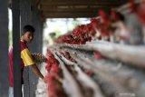 Kementan: Pengendalian produksi ayam ras berdampak positif