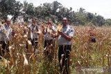 Lapas Terbuka Pasaman siap wujudkan ketahanan pangan sesuai resolusi permasyarakatan 2020 (Video)