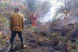 12 hektare lahan kelapa sawit milik Plasma Tiku Lima Jorong hangus  terbakar