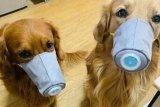 Sejak kemunculan COVID-19, Shenzhen larang warga makan daging kucing dan anjing