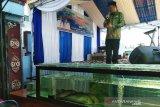 Yulhaidir ingin kenalkan ikan Pipih dengan nama Balida