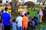 Wisata Gajah Jinak Sumatera