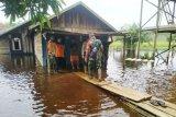 Banjir rendam 17 rumah di Desa Sungai Ubar