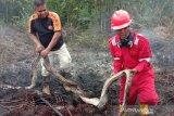 BBKSDA: Ular piton mati akibat karhutla bukan spesies dilindungi