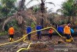 Kebakaran perkebunan sawit di Pasaman Barat, petugas berjibaku memadamkan api