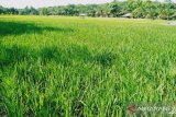 Omnibus Law Cipta Kerja harus bisa mencegah alih fungsi lahan pertanian