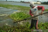Banjir Kudus, 112 hektare tanaman padi puso