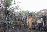 Dua hektare lahan milik warga di Inhil terbakar