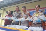 Polda Riau sita 35.345 benih lobster senilai Rp5,3 miliar