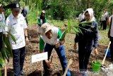 UGM melakukan penanam bambu di DAS Kali Oya Gunung Kidul