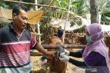 Pemkab Gunung Kidul izinkan ternak dari endimik antraks dijual