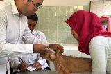 DPP: Vaksinasi rabies di Yogyakarta diprioritaskan untuk anjing