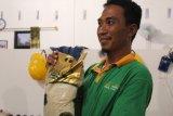Petani Lampung Tengah kini kembangkan beras organik
