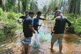 Dinas Perikanan Mukomuko terus berupaya budidayakan ikan liar mikih