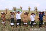 Dinas Pertanian Pulang Pisau upayakan bantu petani korban banjir